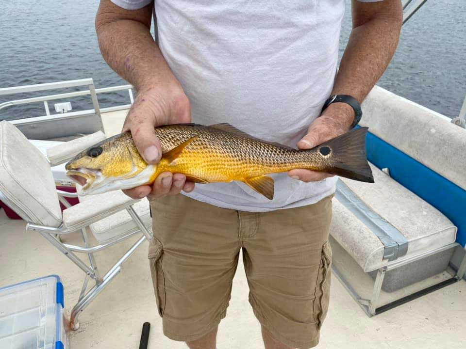 Orangefish2020.jpg