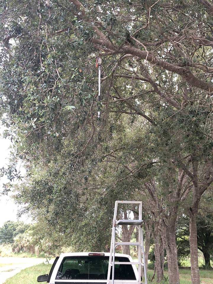 polesawtree.jpg