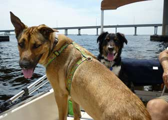 Puppies on sailboat by bridge