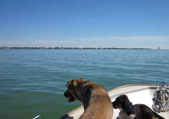 Libby and Luke watch the sailboat races
