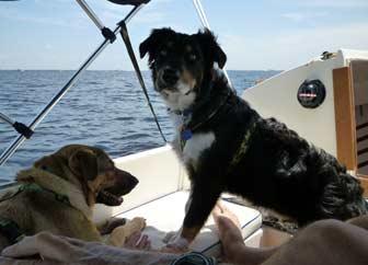 Sailing Pups