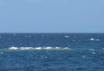 Reef Breaching
