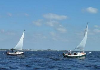 Sun Cats Sailing