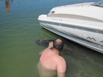 Petting A Manatee