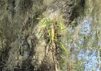 Prairie Creek Wild Orchids